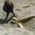 Dinosaur remains found near Issyk-Kul Lake